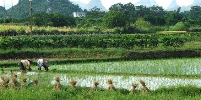 Земля для селсьвького хоязйства в испании