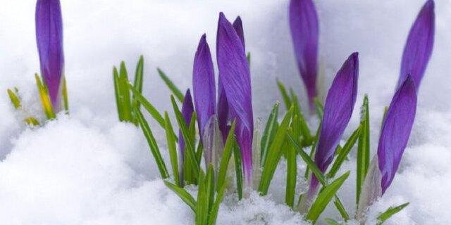 скачать приложение весна знакомства - фото 10