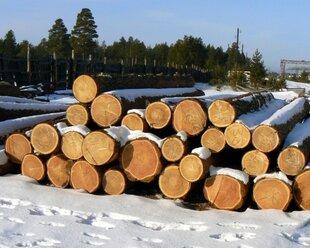 ЕС сделал Украину поставщиком леса-кругляка