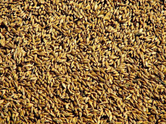 Египет снял все ограничения напоставки пшеницы из Российской Федерации - Мантуров