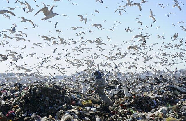 Путин: вред отплохой экологии доходит 15% ВВП