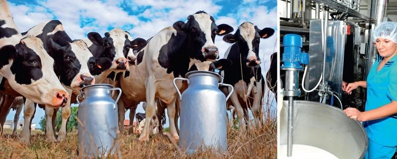 Ткачев: в ближайшие годы молочную отрасль ждет бум