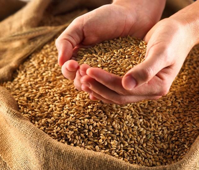 МСЗ: в 2017 г. в России соберут 108,4 млн тонн зерна