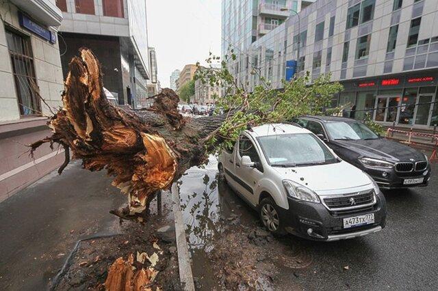 Ураган в Москве и области привел к гибели 12 человек