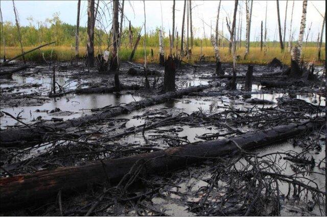 Сибирские ученые вырастили уникальные бактерии— Уничтожающие нефть