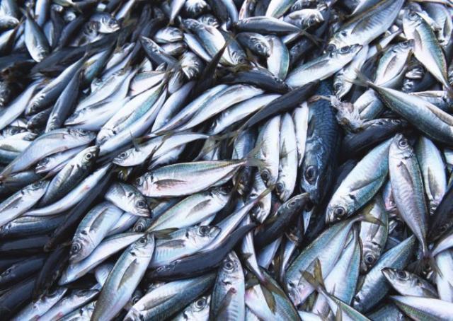 Ученые: рыба в Балтийском море заражена люизитом