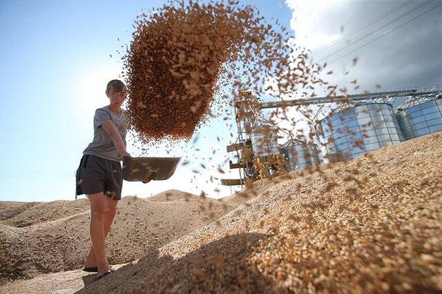 Экспорт зерна из Российской Федерации может достигнуть 40 млн тонн— Ткачев