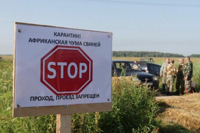 Очаг чумы свиней обнаружили уже вчерте Омска