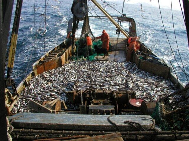 Росрыболовство оптимизирует поставку рыбы сДальнего Востока