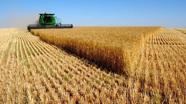Урожай зерна в РФ уже превысил прогноз 110 млн тонн