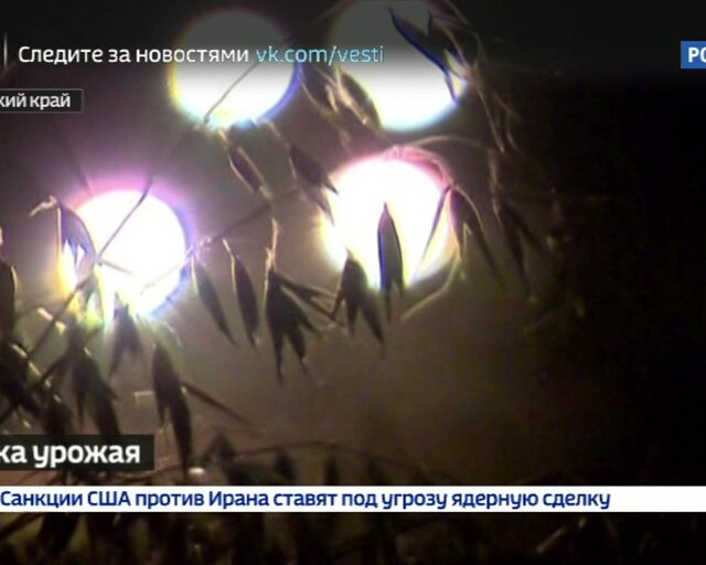 А жаловались на погоду... РФ готовится к рекордному урожаю зерна