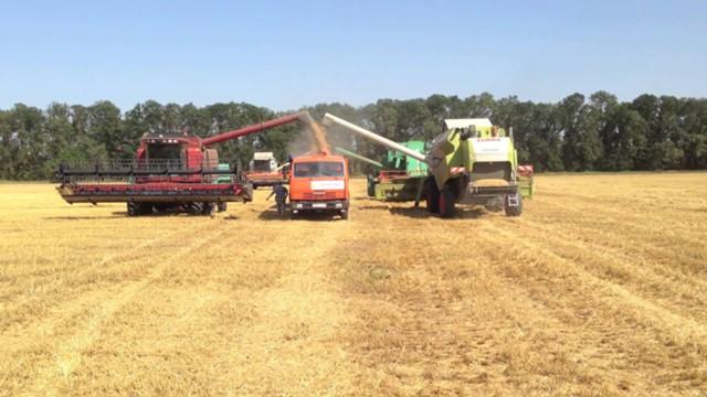 Цены на зерно в России начали расти