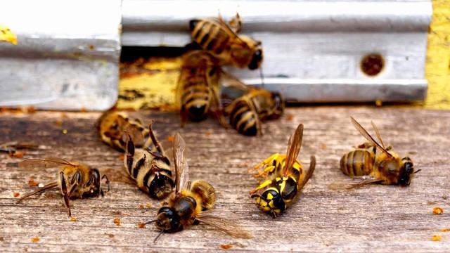 Ученые: с/х производство ведет к вымиранию насекомых