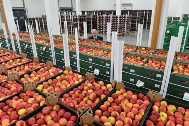EC выделил производителям фруктов €490 млн из-за эмбаргоРФ