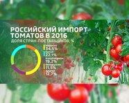 Российский импорт томатов в 2016 году