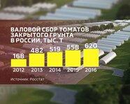 Валовой сбор томатов закрытого грунта в России с 2012 года