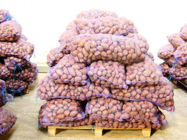 Счетная палата передала о уменьшении уровня самообеспеченности РФ картофелем