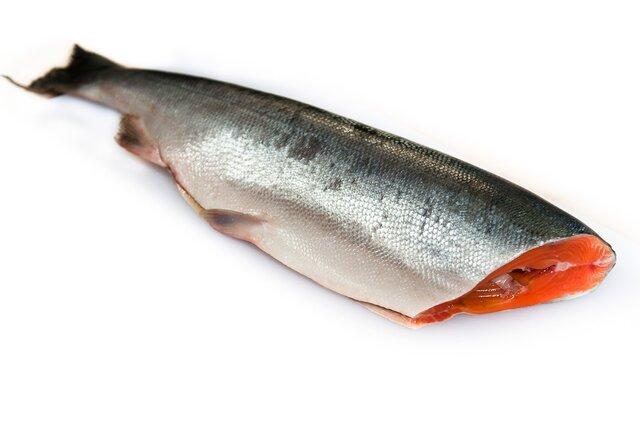 Русский посол: Норвегия не отыскала замену российскому рыбному рынку