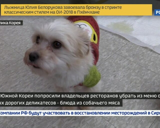 """""""Мы давно не едим собак!"""" Корейцы вынуждены спасать честь страны"""