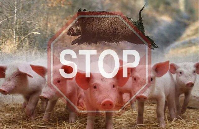 Польский «забор против свиней» на границе с Украиной озадачил Еврокомиссию