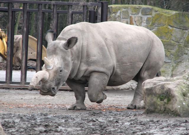 10 животных, вымерших за последние 20 лет